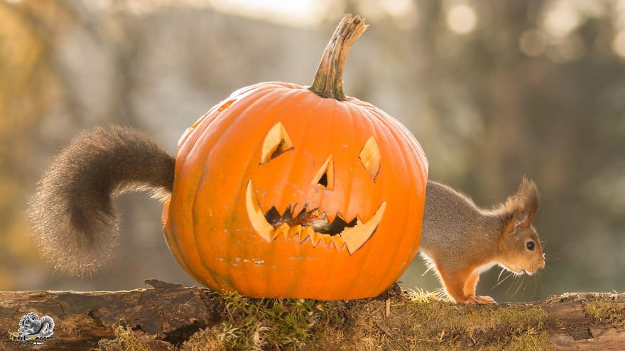 squirrels-halloween-costume