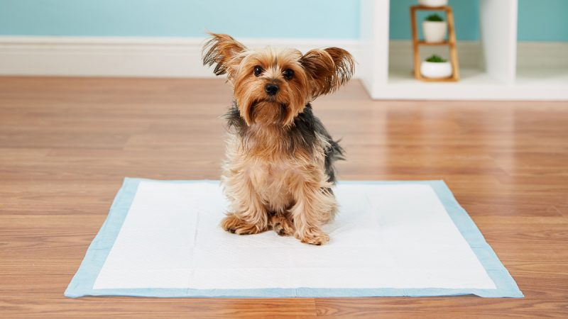 Potty Training Puppy Frequently Asked Questions