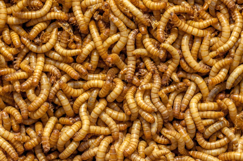 How To Get Rid Of Maggots On Kitchen Floor Patio Carpet