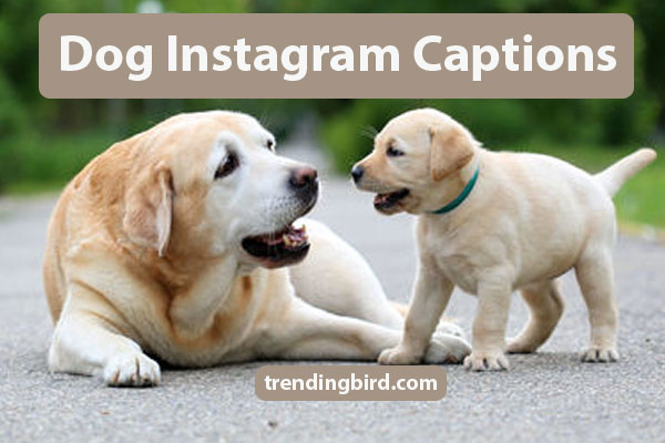 dog-instagram-cpations